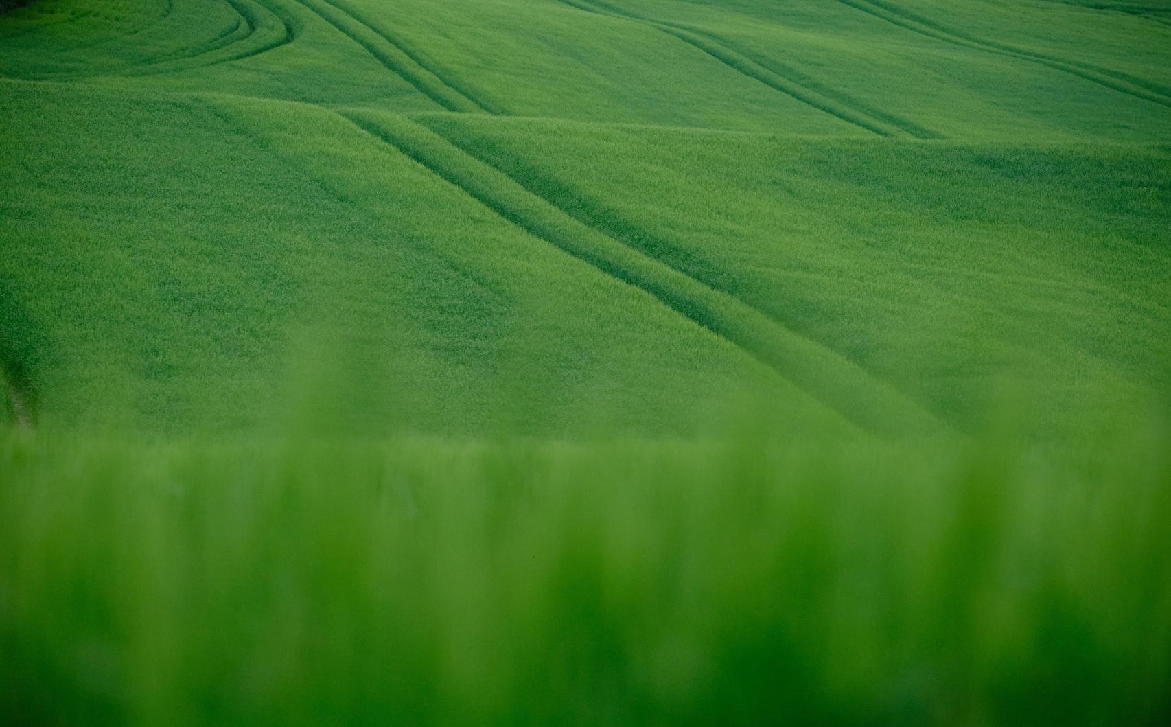 Zelené investice, Wonderinterest s.r.o., Roman Vykouřil