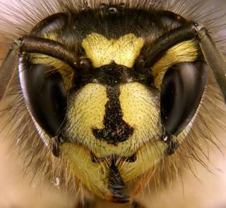 Nenadržujme včelám, mějme rádi i vosy